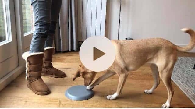 oefeningen leren aan je hond, Hondentaak Club