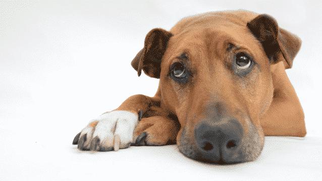 Hond alleen laten