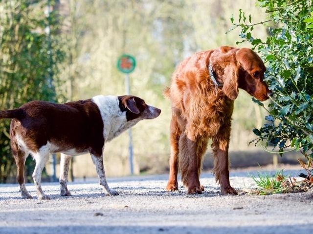 Hond negeert andere hond