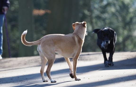 Socialisatie bij een hond
