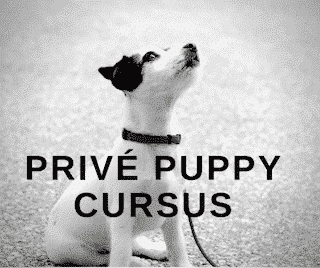 Prive puppy cursus
