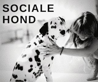 Sociale Hond