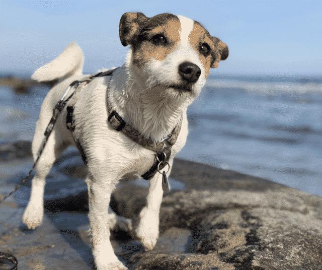 Ontspannen wandelen met je hond