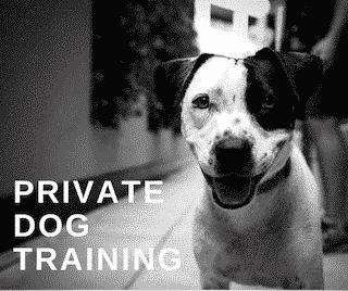 Private dog training wassenaar