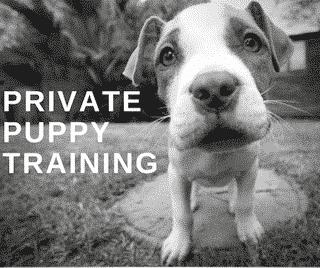 Private puppy training wassenaar