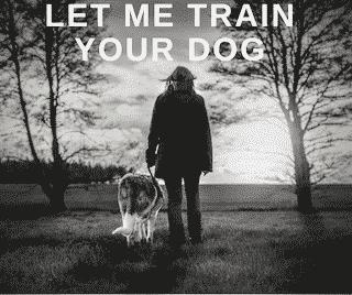 let me train your dog wassenaar