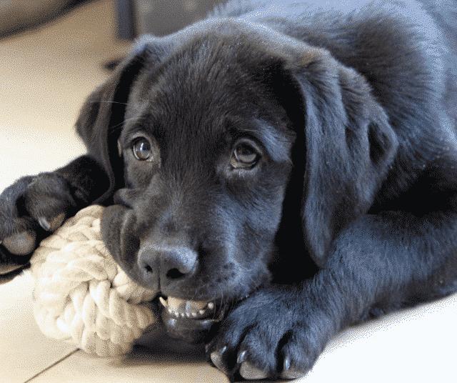 Ik krijg een pup