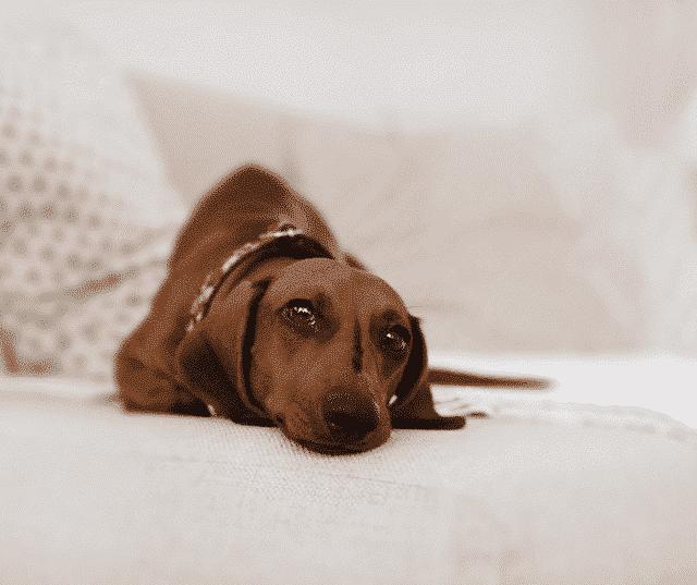 hond leren om alleen te zijn