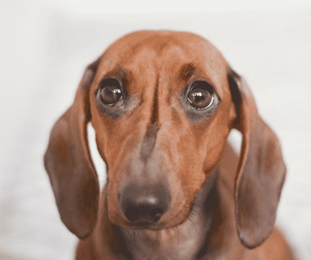 hond angst afleren