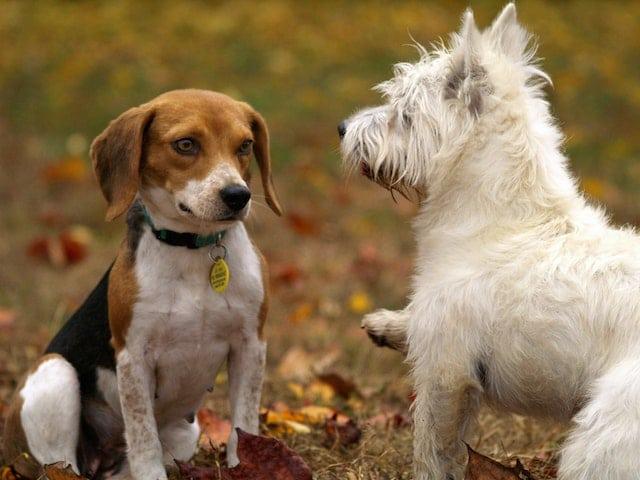 hond onzeker bij andere honden