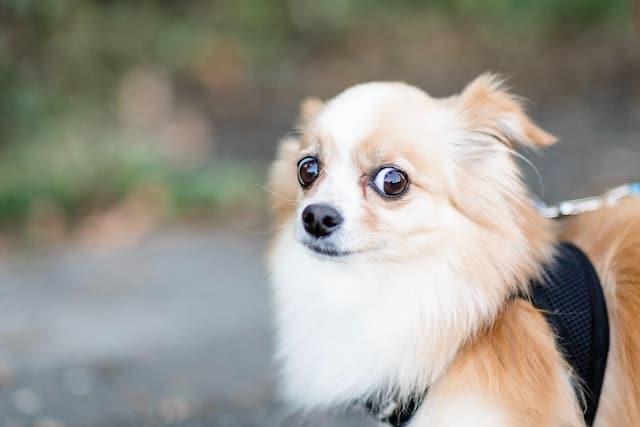Hond angstig buiten
