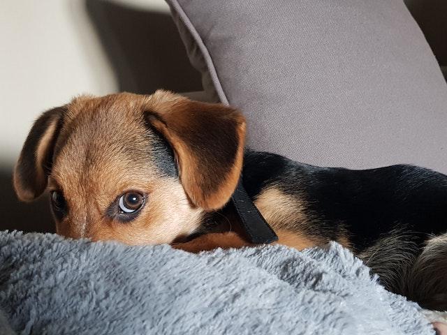 Oorzaken onzekerheid hond