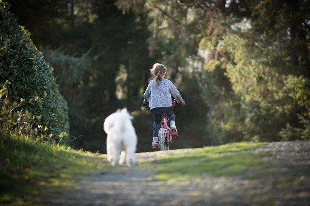 Hond leren kinderen te negeren