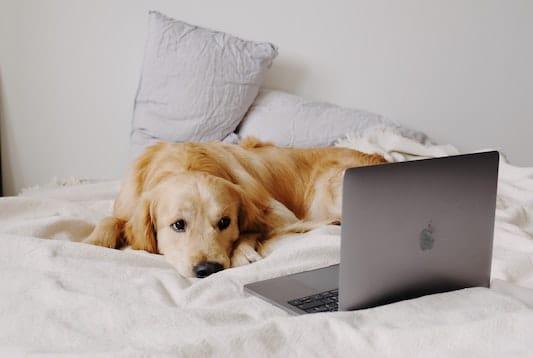 Online cursus hondengedrag