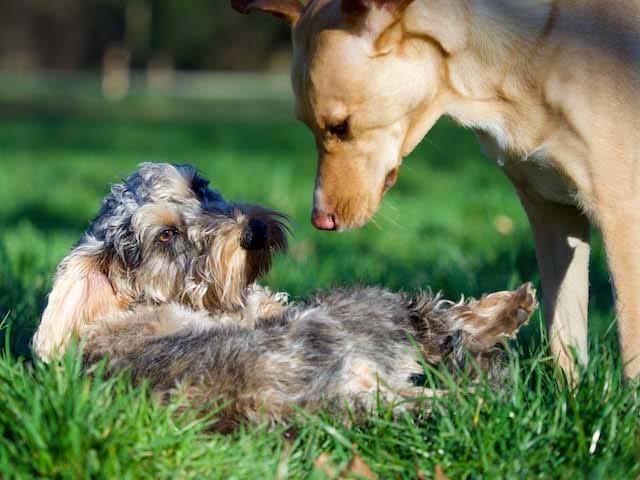 dogtraining Wassenaar