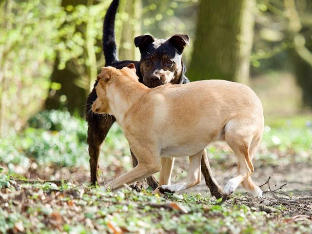 Uitvalgedrag hond