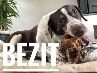 Je hond bezitsagressie afleren