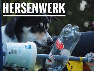 Hersenwerk online cursus hond puzzelen leren