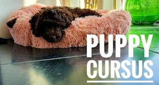 Puppy cursus