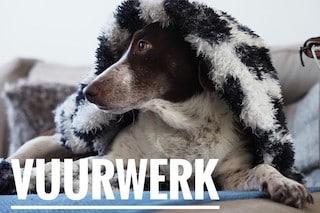 Online hondencursus Vuurwerk