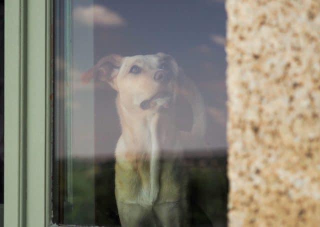 bezoek ontvangen hond
